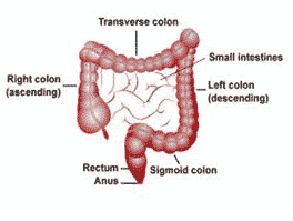 Colorectal Surgery Kochi Colonoscopy Colon Cancer Treatment Colectomy Ernakulam Medical Centre
